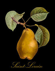 Saint Lerain Pear