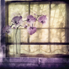 Window Orchids